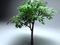 3d vue plant model