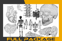 package human parts body skeleton 3d model