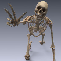 Human skeleton rigged