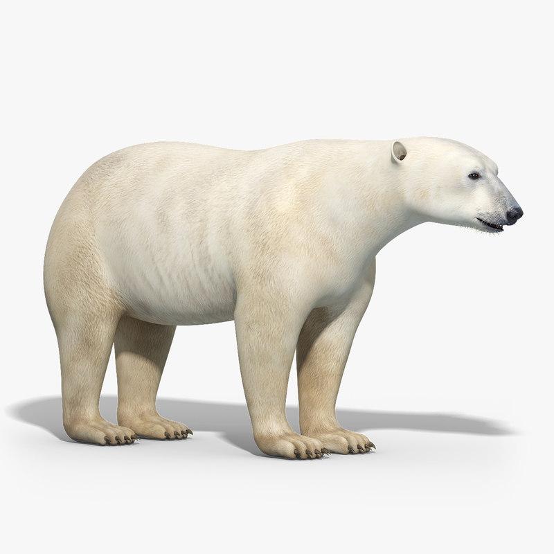 polar_bear_model_01.jpg
