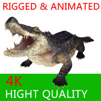 crocodile alligator animation 3d model