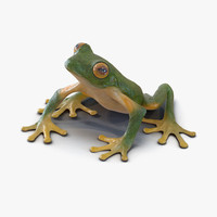 3d max tree frog rigged