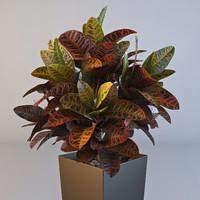3d croton plant pot model