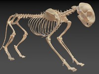 Cat Skeleton 2in1