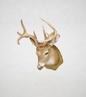 3d model deer bust