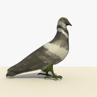 3d model single walking pigeon animation