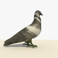 3d model single walking pigeon animation
