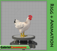 chicken gallus domesticus 3d x
