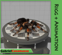 3d spider tarantula model
