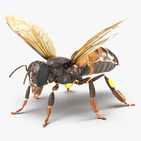 3d model honey bee rigged