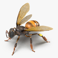 3d model honey bee pose 2