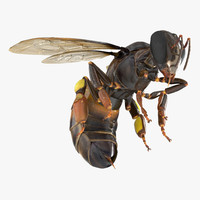 3d model honey bee pose 3