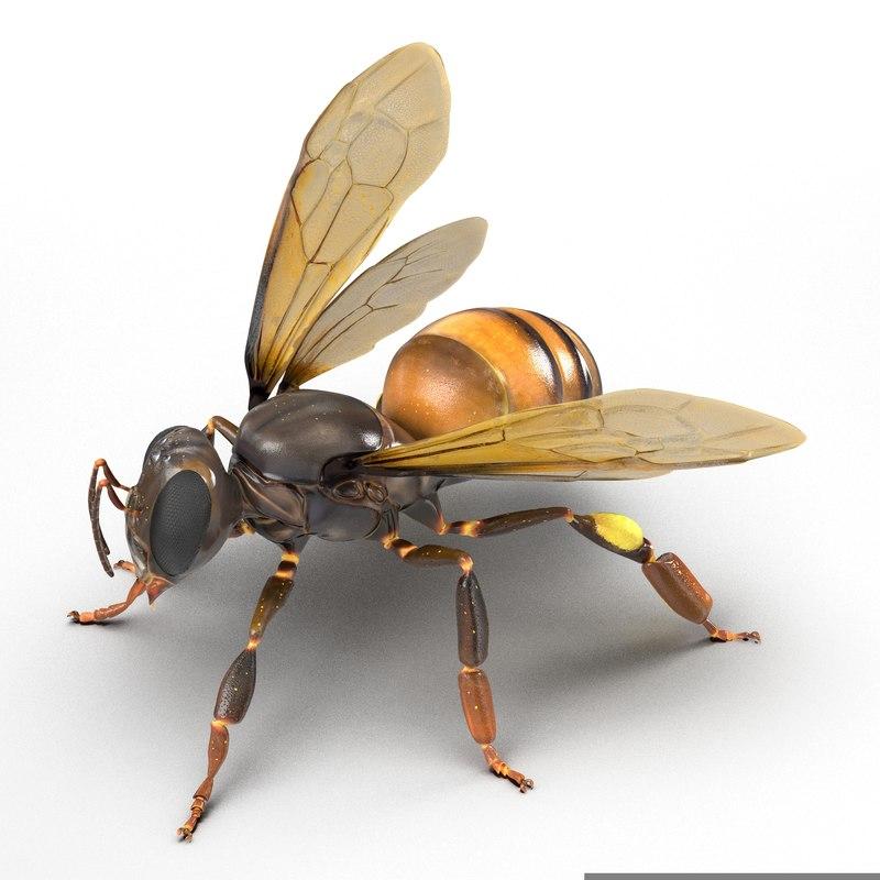 3d model of Honey Bee 01.jpg