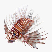 lion fish 3ds