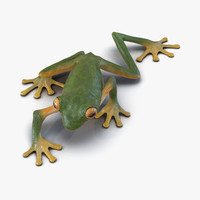 3d max tree frog pose 2