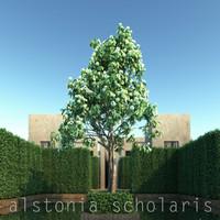 3d model alstonia scholaris