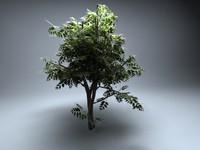 vue plant 3d 3ds