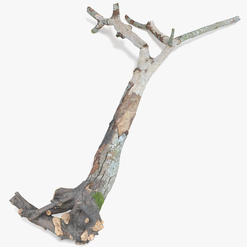 Withered_tree_signature_4k.png
