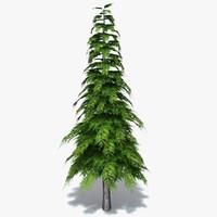 obj conifer tree