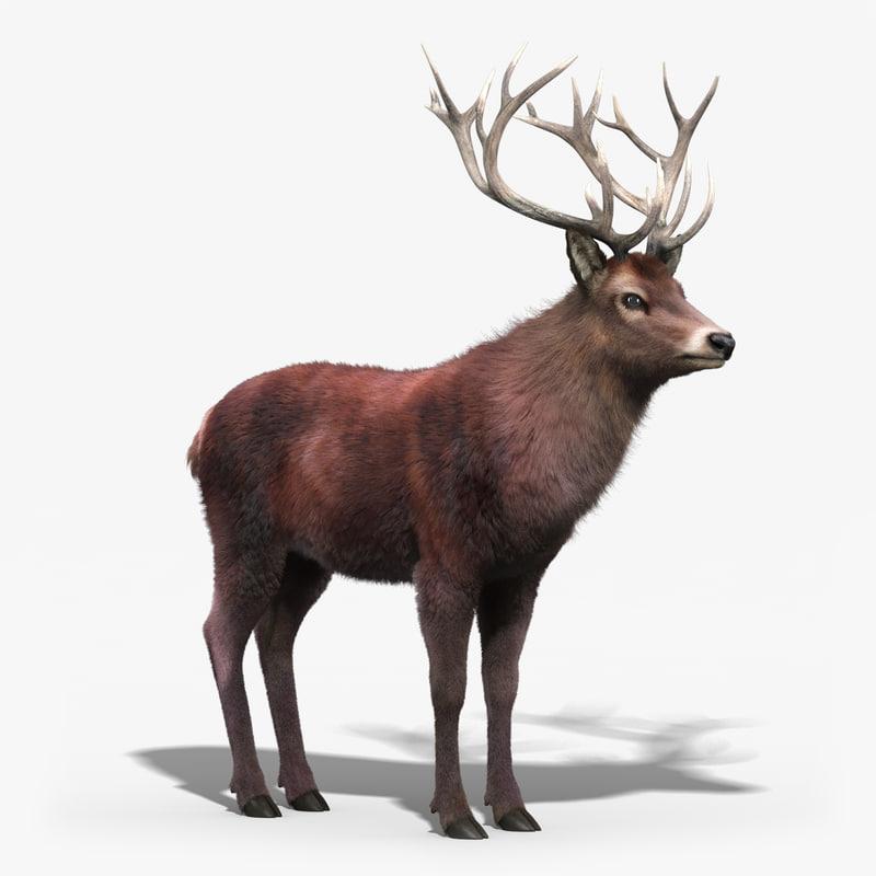 red_deer_FUR_01.jpg
