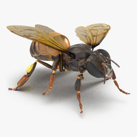 3d model honey bee pose 4