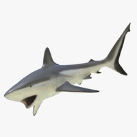 grey reef shark rigged 3d max