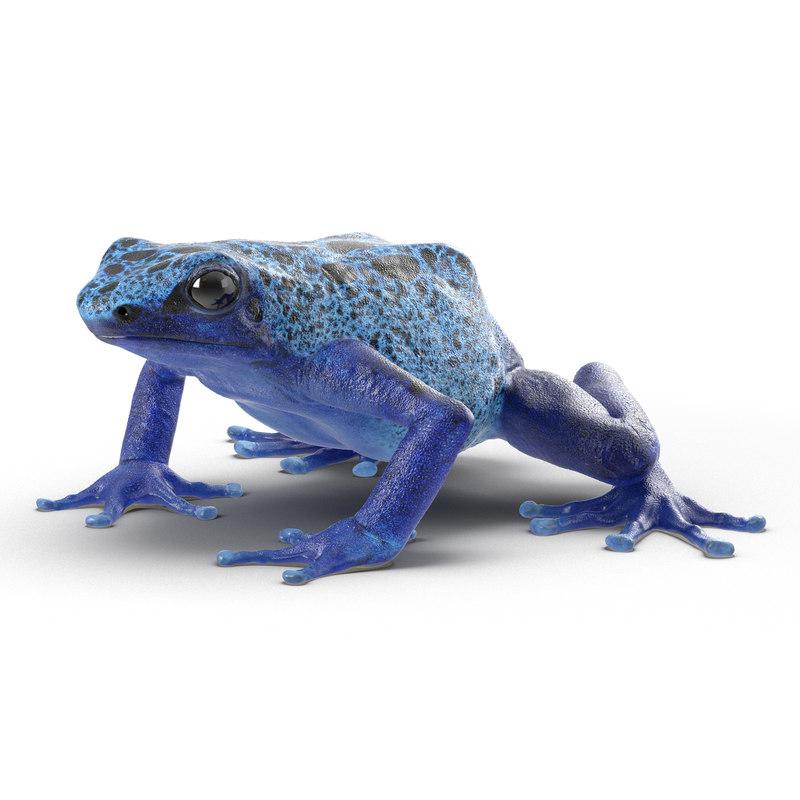 Poison Dart Frog 3d model 02.jpg