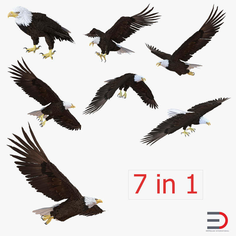 Bald Eagle Collection 3d models 01.jpg