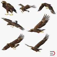 golden eagle 3d max