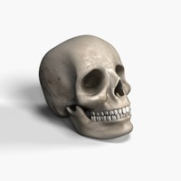 skull bone 3d model