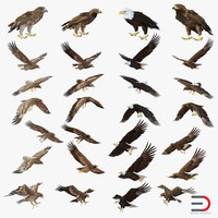 eagles set bald 3d c4d