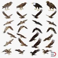 eagles set bald 3d c4d