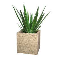 aloe vera potted plant 3d model