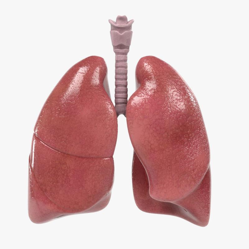 Respiratory System.jpg