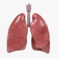 3d respiratory model