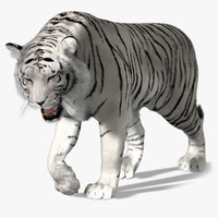 white tiger fur animation 3d ma