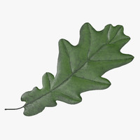 green oak leaf 3d model