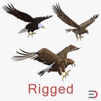rigged eagles 3d max