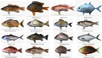 Perch 3d models for Ma saltwater fishing license