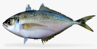 3d model pacific bumperfish fish