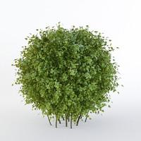 3d bush short-haired form sphere model