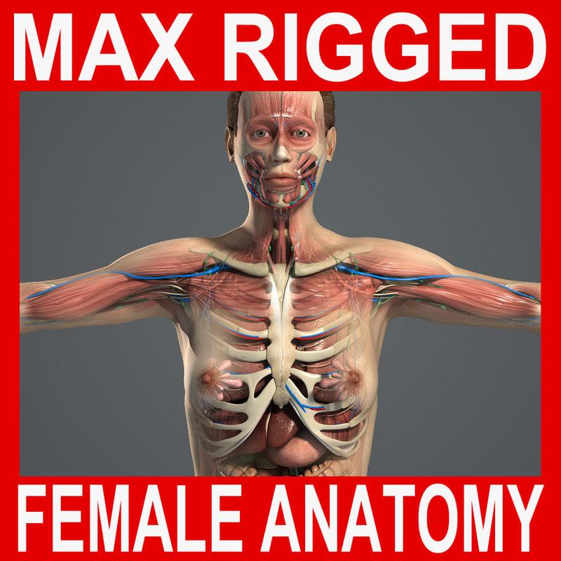 Complete-Female-Anatomy-MAX-Rigged.jpg