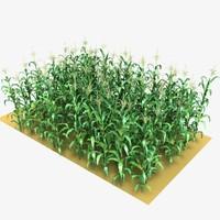 3d max corn field
