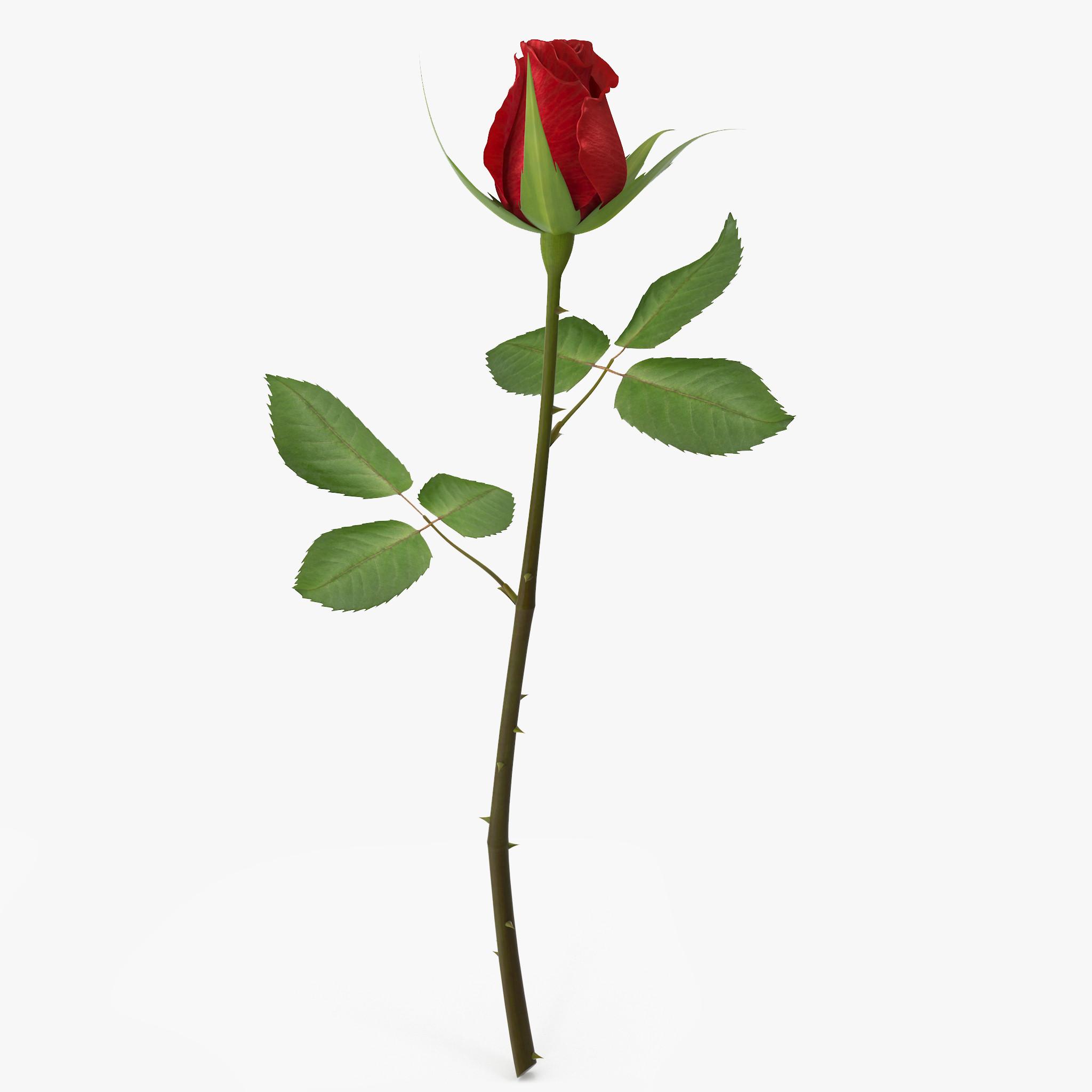rose 7_1_1_1.jpg