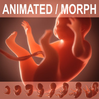3d model Human embryo, fetus. Growth animation.