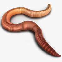3d model earth worm pose 2