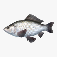 3d model gibel carp prussian animation