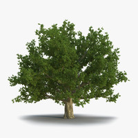 red oak old tree 3d model