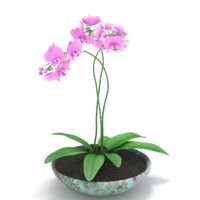 3d model orchid realistic