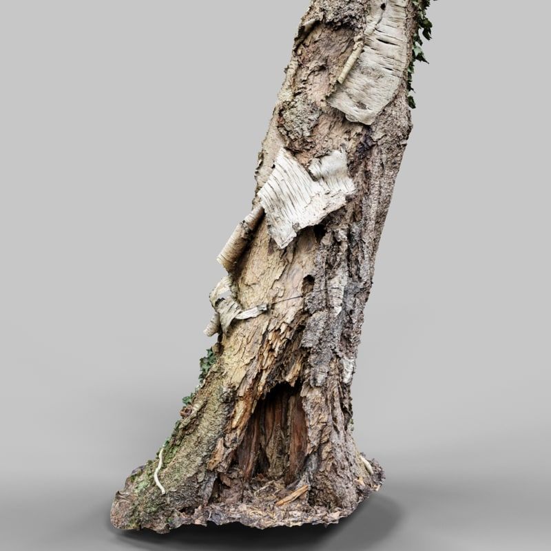 Around The Paper_A1_Tree_Bark_Environment_Art_Sample_Reference_Material_Nature_3D_Model_Scan_Photogrammetry.png